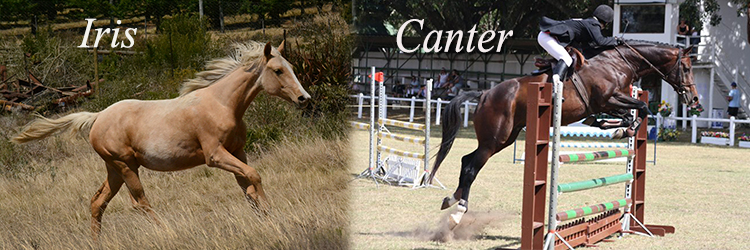 Iris and canter